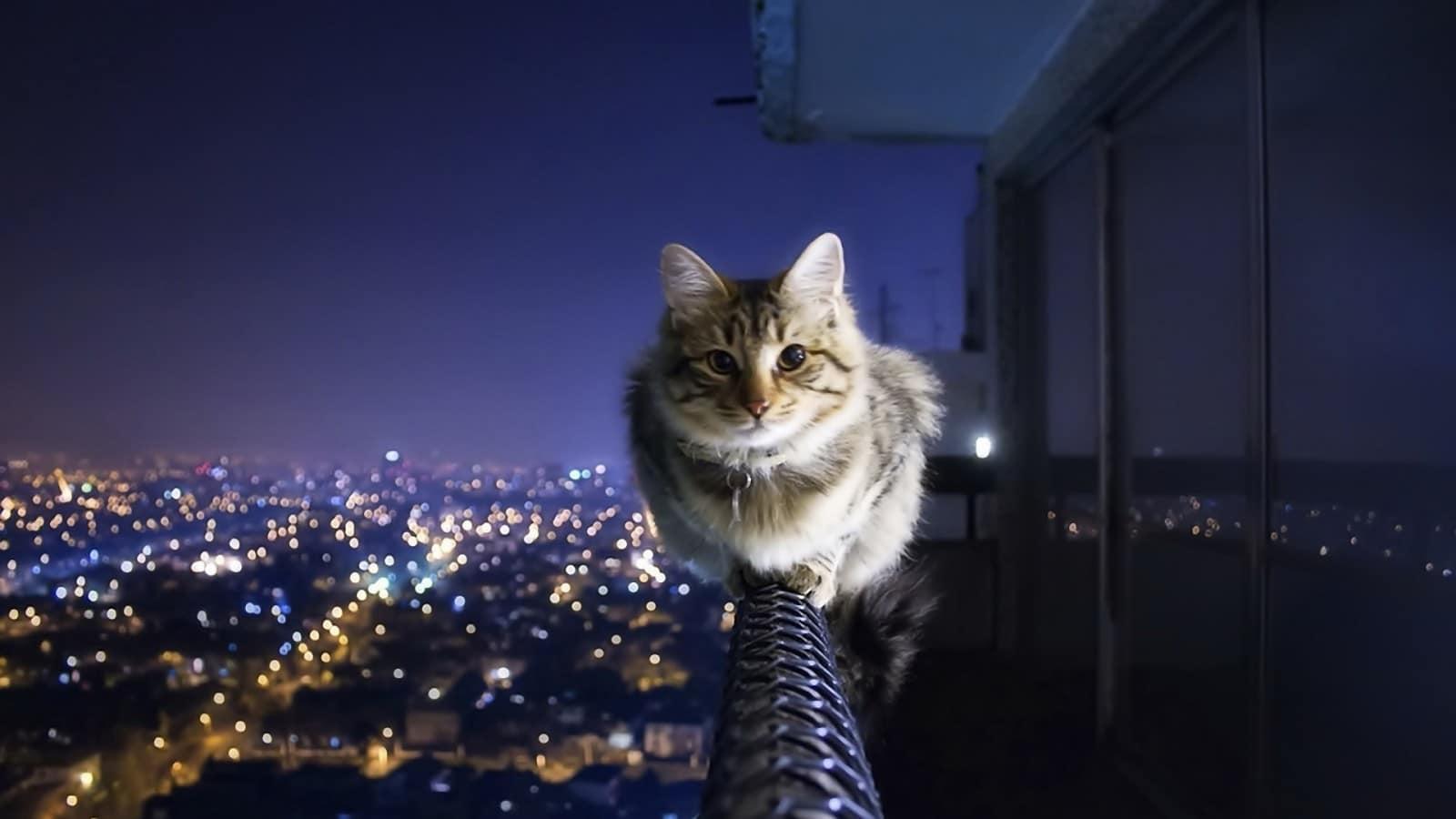 10 жизненных советов от кота