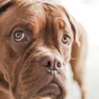 Почему животным нравится, когда их гладят?