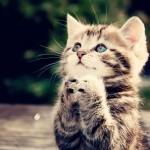 14 способов, как коты демонстрируют вам свою любовь