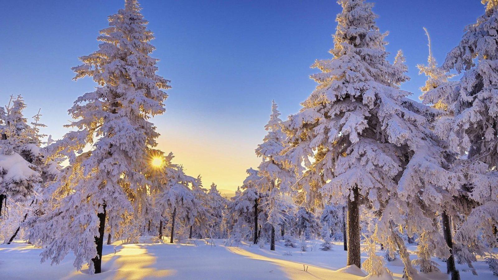 Правила зимнего детокса
